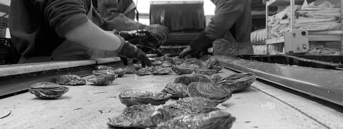 La Cancalaise - Nos Huitres - Retour de pêche